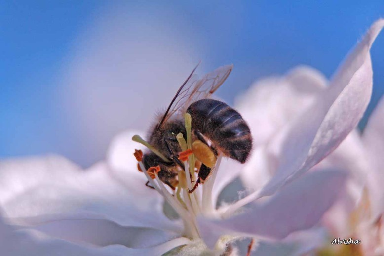 fleurs-et-insectes 2963 ob