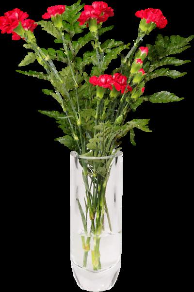 Fleurs oeillets 1