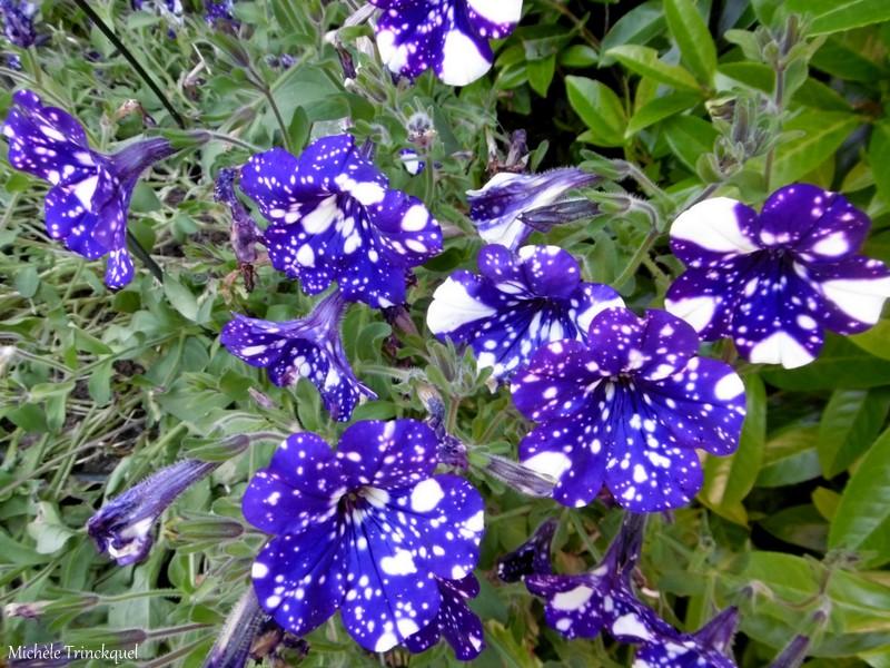 Une balade... dans le jardin fleuri d'une copine....