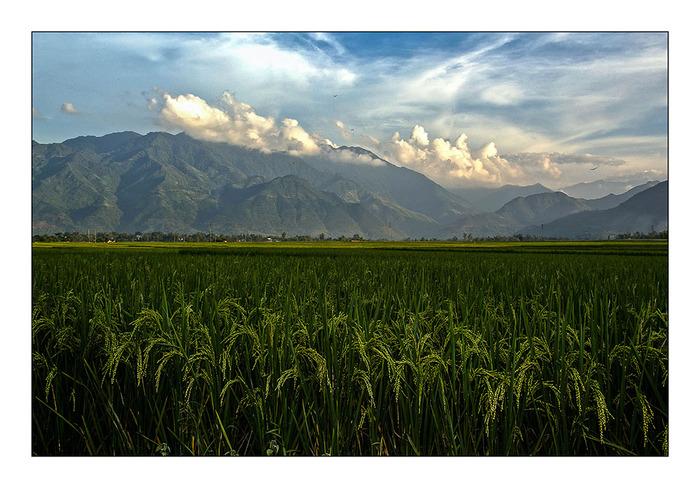 Une rizière par jour 4