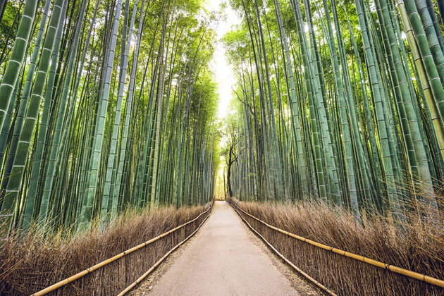 La forêt de bambous à Sagano au Japon