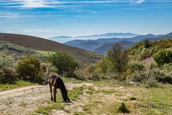 9e jour de marche : Ambasmestas - O Cebreiro : 13,8km - 4h de marche - 800 m dénivelé positif