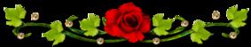 Des Roses et mon Coeur