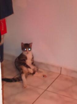 ce chat est bizarre