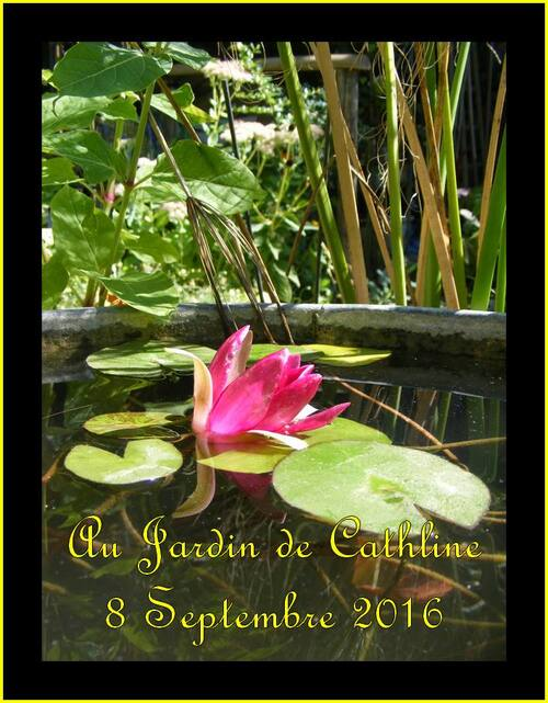 Jardiner avec la lune du 11  au  20 Septembre