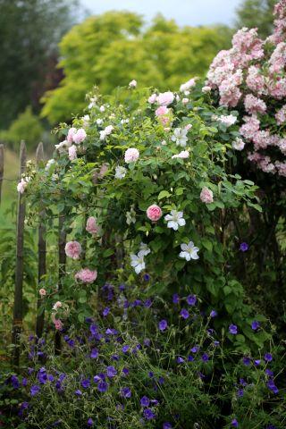 Le jardin comme exutoire (13)