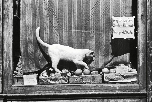 02 - Des chats à la fenêtre