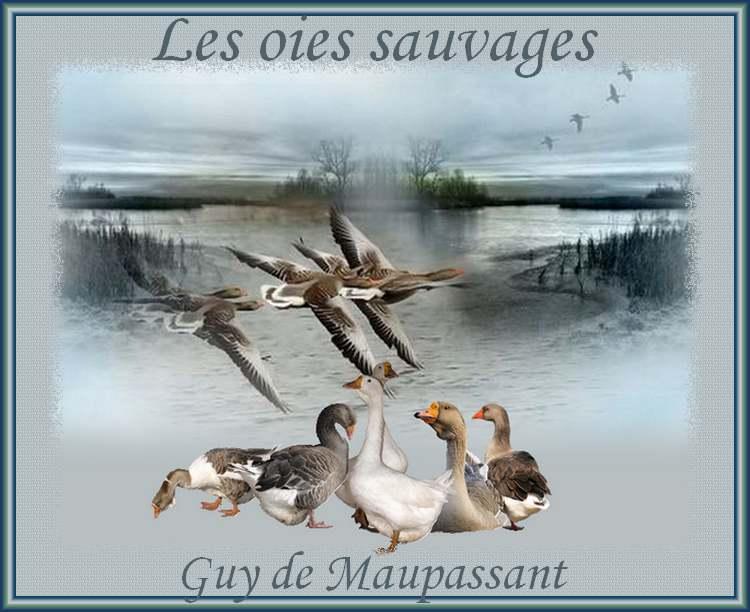 """"""" Les oies sauvages """" poème de Guy de Maupassant"""