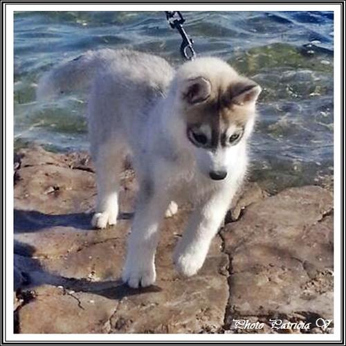 Inouk (2,5 mois)