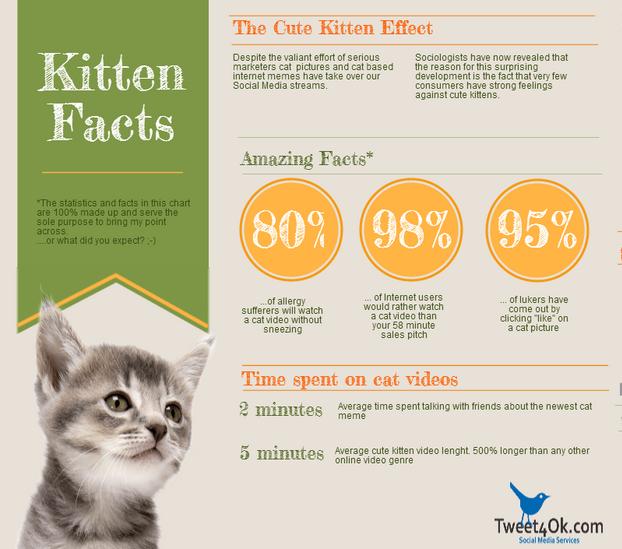 3 Tips for Raising Baby Kittens