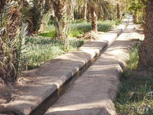 Petit canal d'irrigation et plantation de poireaux
