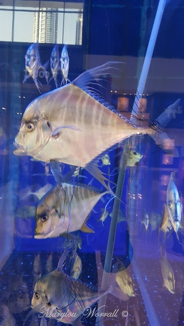 Dubaï : Petits bâtiments et aquarium