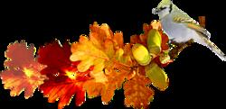 de ci- de-la couleur d'automne
