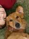 bailey Mes vies de chien