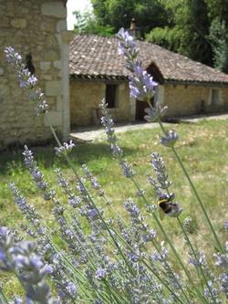 Jardin sauvageon d'un presbytère girondin