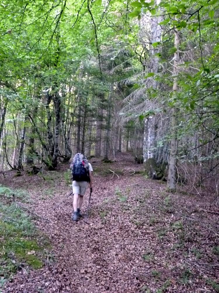 Dans la montée en forêt