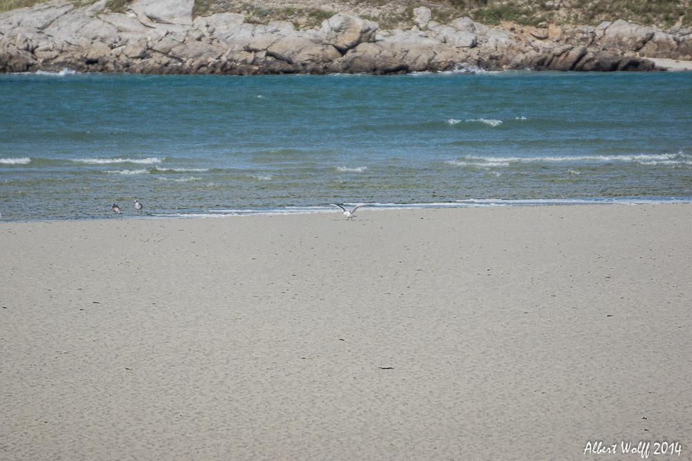 Bretagne 2014 - Du sable et de l'eau - 2