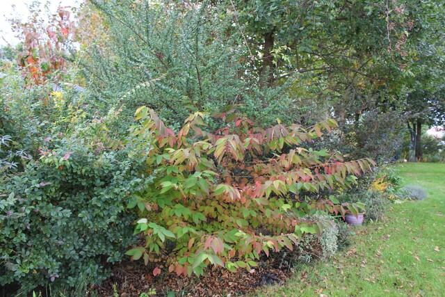 L'automne dans mon jardin landais