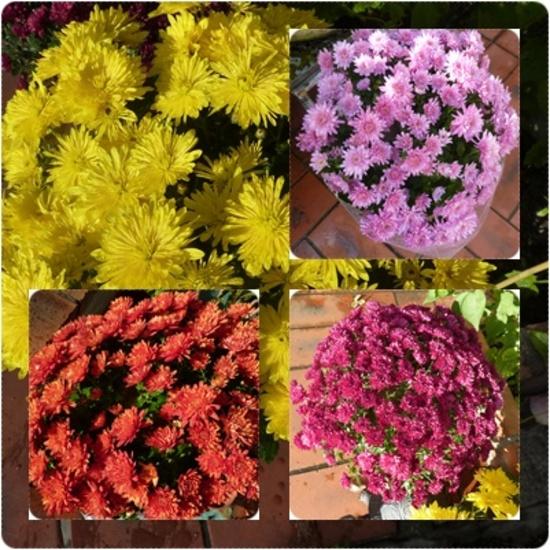 Flower Power 2015