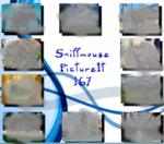 PictureIt 167 - Sniffmouse