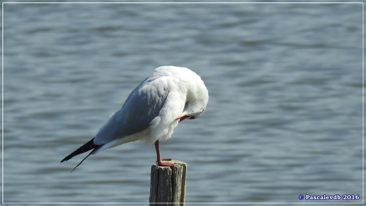 Réserve ornitho du Teich - Septembre 2016 - 2/11