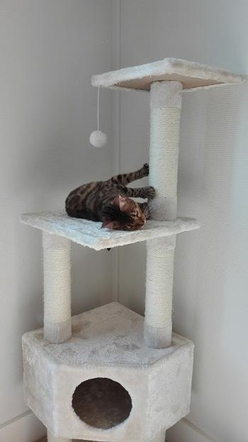 Arbre à chat Zolia - Zoomalia