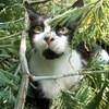 Fantômette le chat