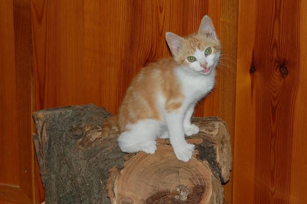 chaton12juilletf