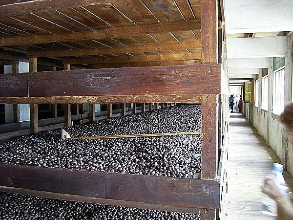 800px-Muskatnuss-Fabrik Trocknungsgitter