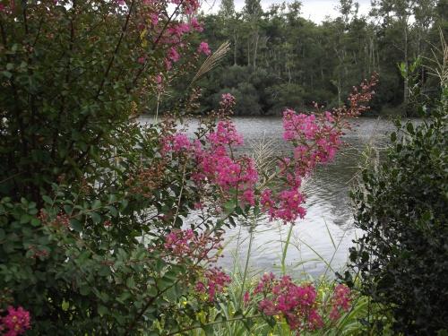Promenade Fleuries à Mimizan !!