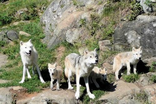 La peur du loup le nouveau blog de zaza for La peur du nombre 13