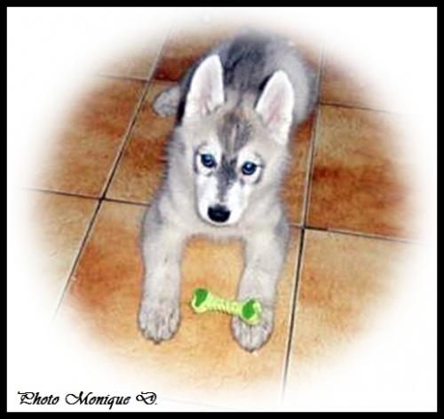 Hanaya (2 mois)