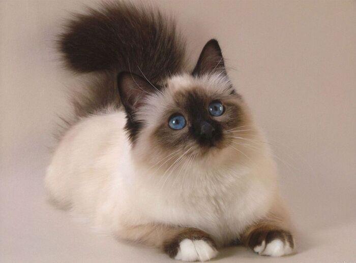 Le Chat...Ce Félin Pas Comme Les Autres...
