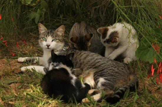 Des photos très attendrissantes de chats