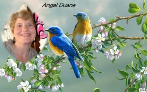 pixiz_506ef4291371d-Angel-Duane--3-.jpg