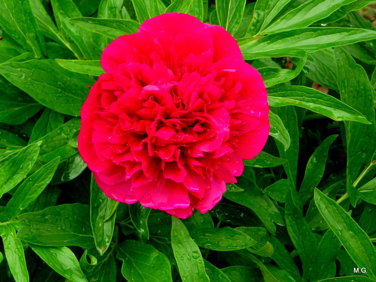 Les Fleurs Du Jardin Euroseconde