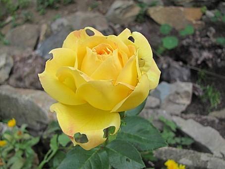 fleurs-7415.JPG