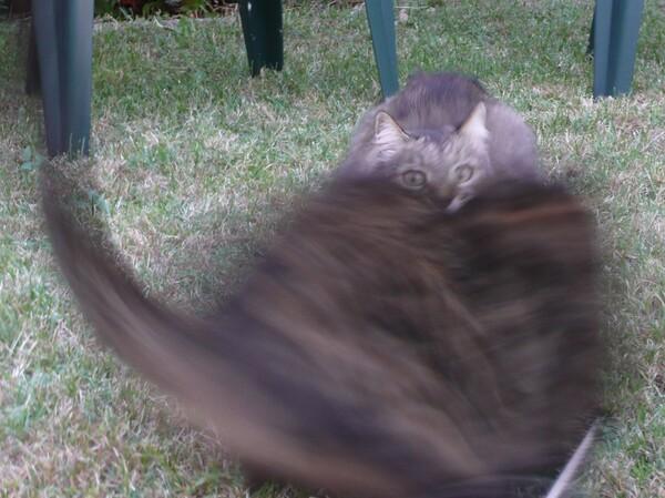 Photo ratée de deux chats