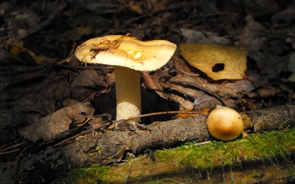 Beauté de la nature  * Les champignons