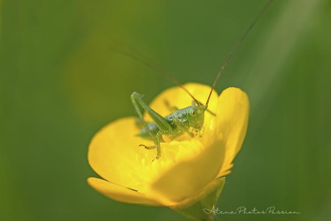 Défilés d'insectes