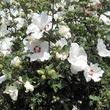 Fleurs de Provence - Août 2016