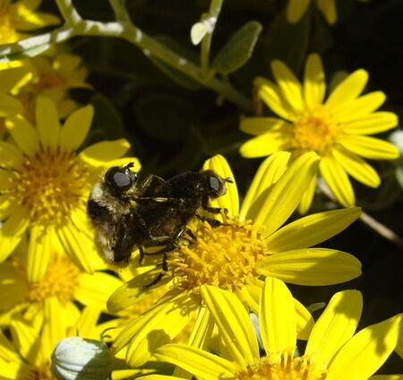 abeilles_02