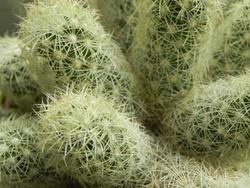 Plantes grasses  et Cactees