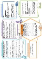 organigramme projet 1