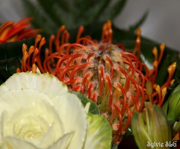 Un joli bouquet ...