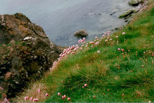 irlande mai 2001