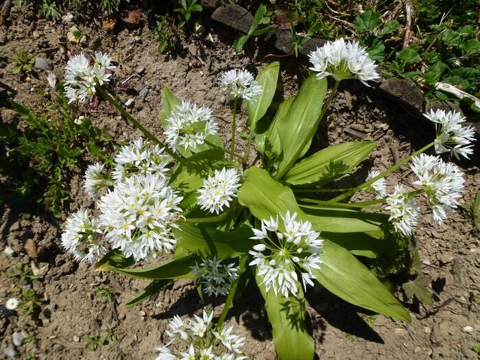 Bon dimanche avec quelques fleurs du jardin