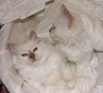 Les chatons de Fun et Furby
