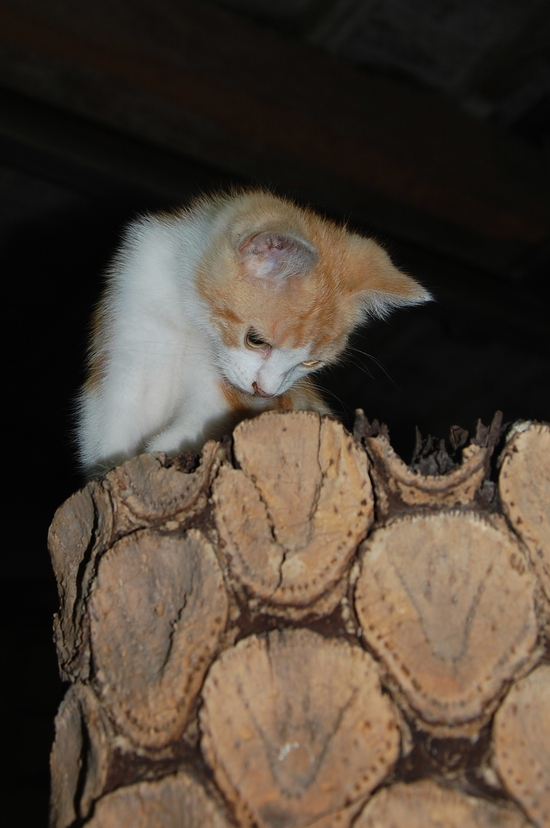 chaton09juilleti
