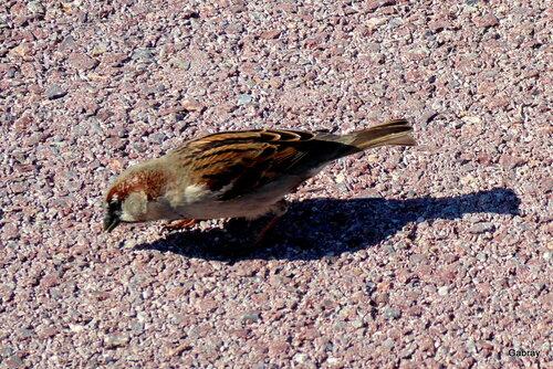 Des oiseaux: moineaux, pigeons ...